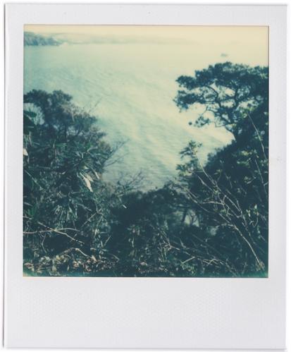 Looking down cliffs through trees and shrub the sea and beyond