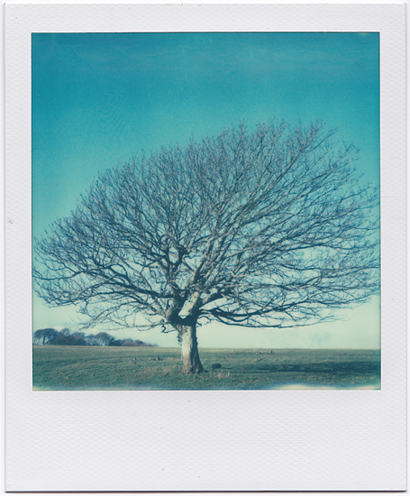Windswept and Battered This Lonely Tree Polaroid SX-70