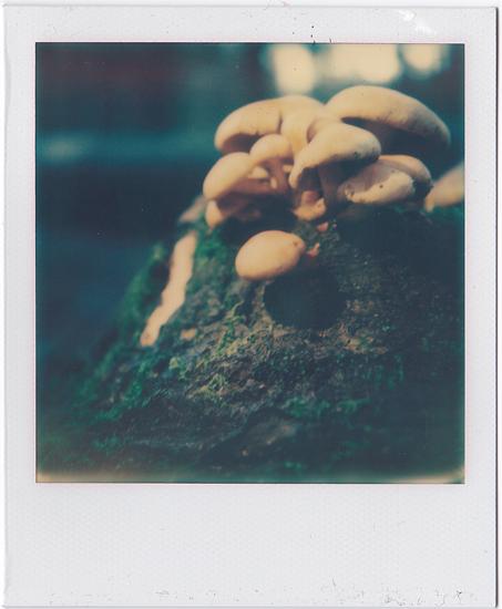 Look! Mushrooms!
