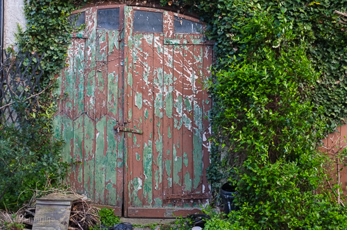 Into - and beyond - growth - change lovely ageing.. peely paint and textures on these doors.