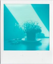 Cyanograph #1