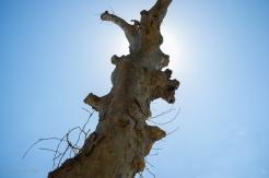 This Tree