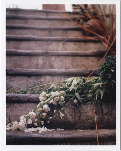 Fallen Flowers Yashica Mat 124-g