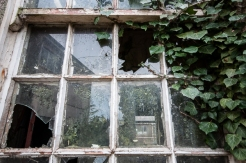 Windows; overgrown.