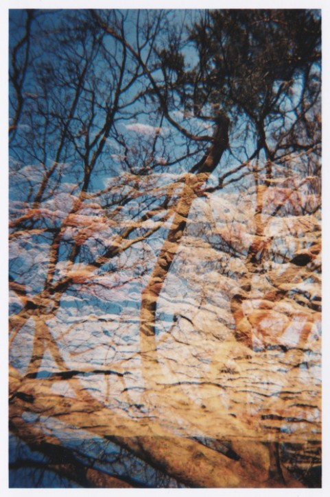 Double Exposure - Trees & Bark