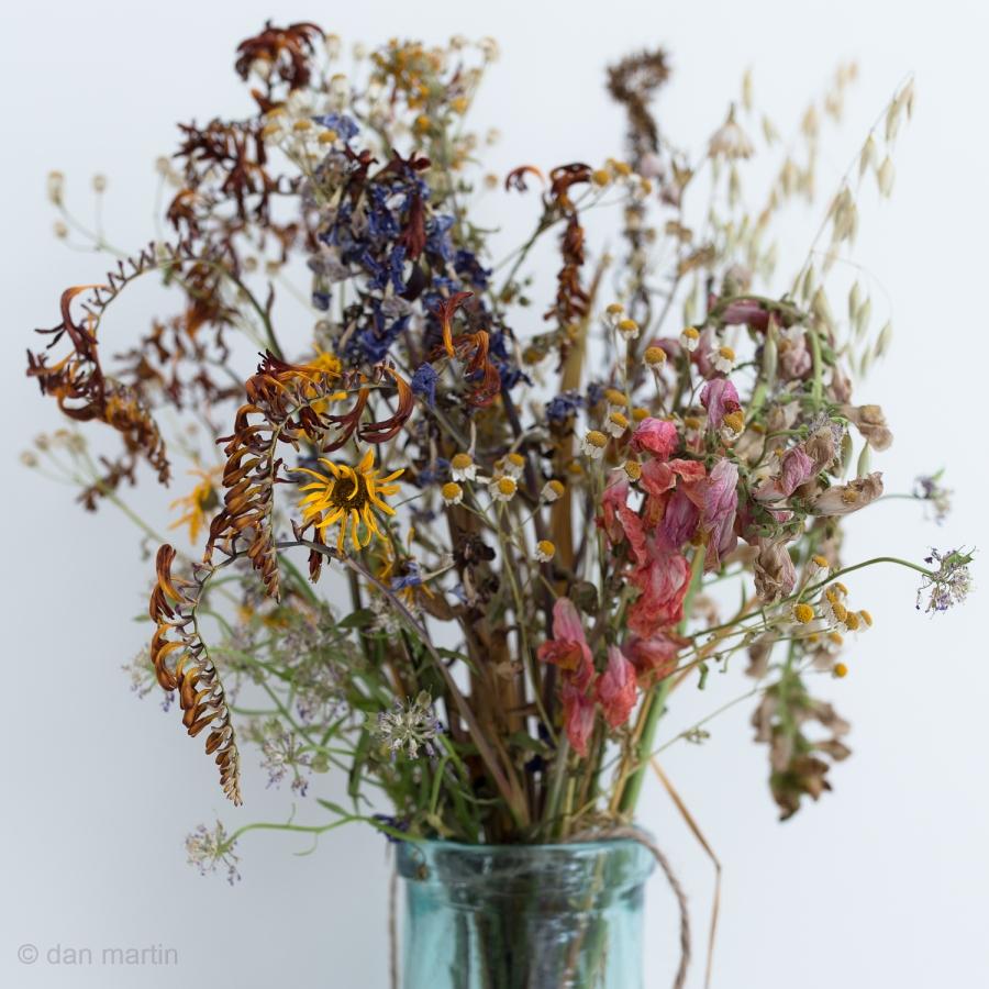 Beauty in flowers wilting
