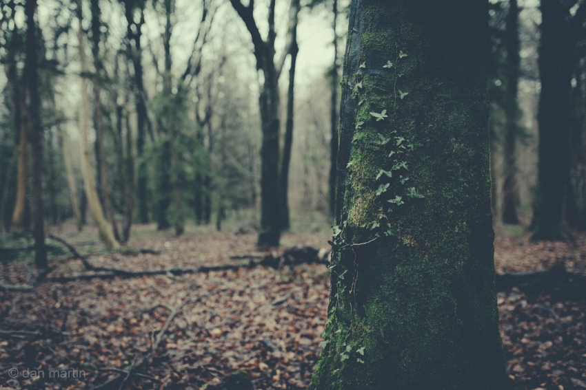 You have to love woods in the winter; the cold light, the dampness. Saturated. Eerie.  Yet beautiful.