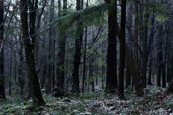 Winter days. Grey, overcast. Wet. Dark trees.