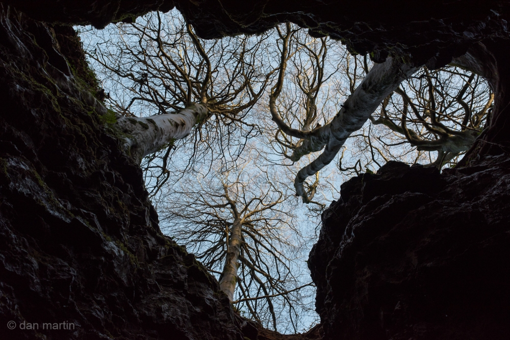 Looking up; Silhouetted trees, clinging on.  Another perspective.