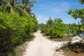 Beach Paths