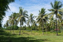 The interior of the island consists of beach paths, areas for livestock and the locals houses.