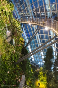 Elevated walkways throughout the Cloud Forest.