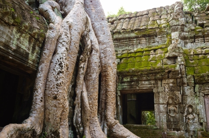 The tree's roots, and they way they sit over the ruins, is just increible.