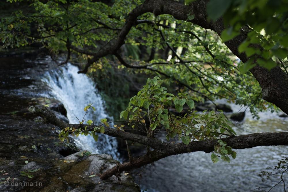 Foreground tree Precarious Nature