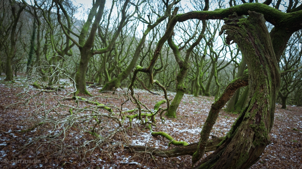 Well, maybe not Mirkwood. But still a lovely twisted, gnarly kinda freaky area of woodland.