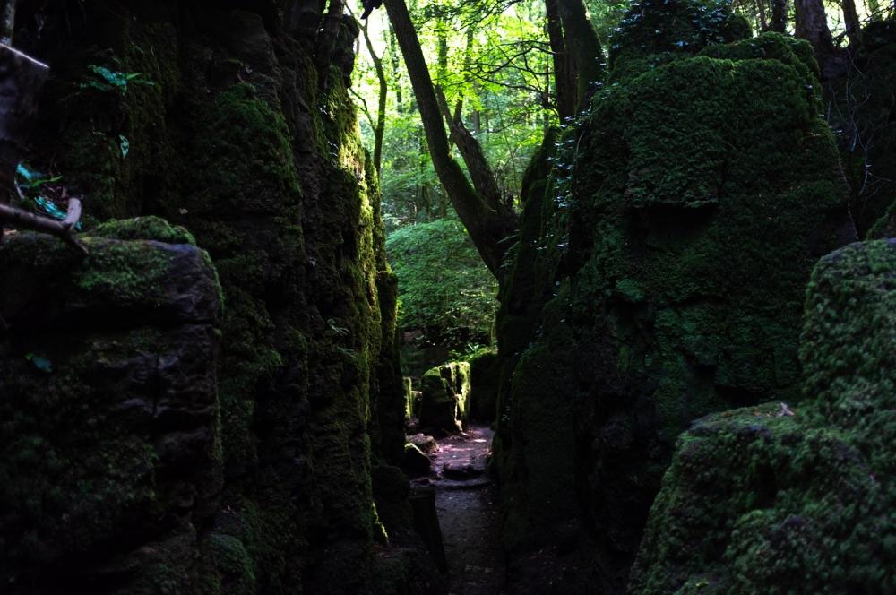 Paths #4