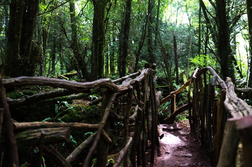 Paths #5